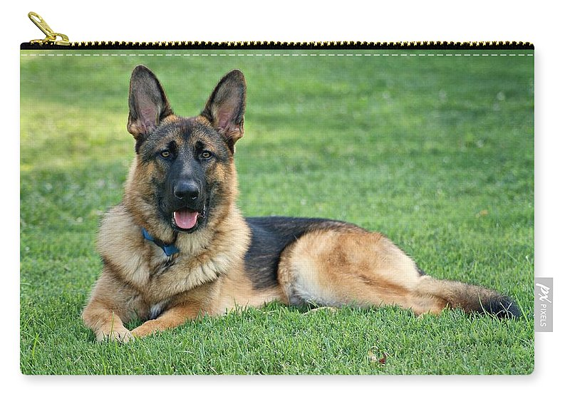 German Shepherd Carry-all Pouch featuring the photograph Enjoying A Summer Morning by Sandy Keeton