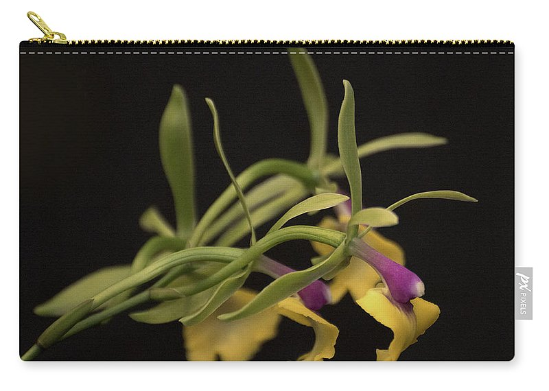 Green Epicattleya Carry-all Pouch featuring the photograph Epicattleya Rene Marques 'tyler'  4891 by Terri Winkler
