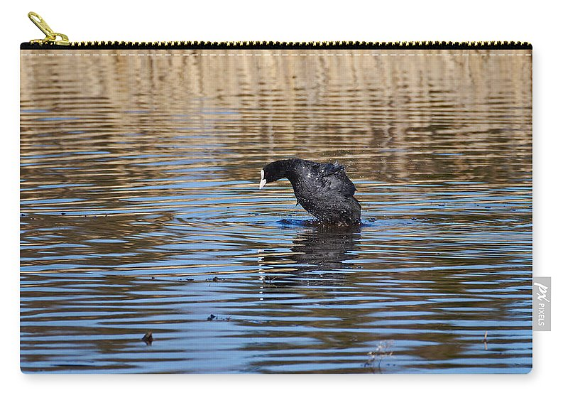 Eurasian Coot Carry-all Pouch featuring the photograph Eurasian Coot by Jouko Lehto