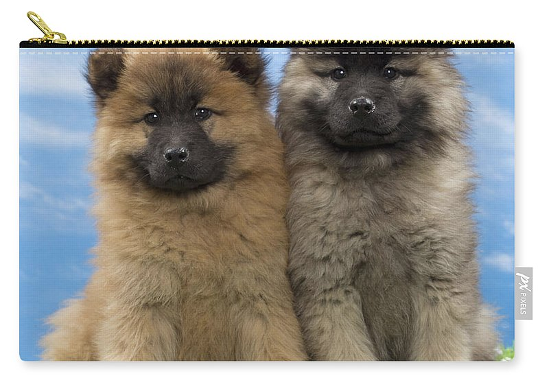 Eurasier Puppies Carry All Pouch For Sale By Jean Michel Labat