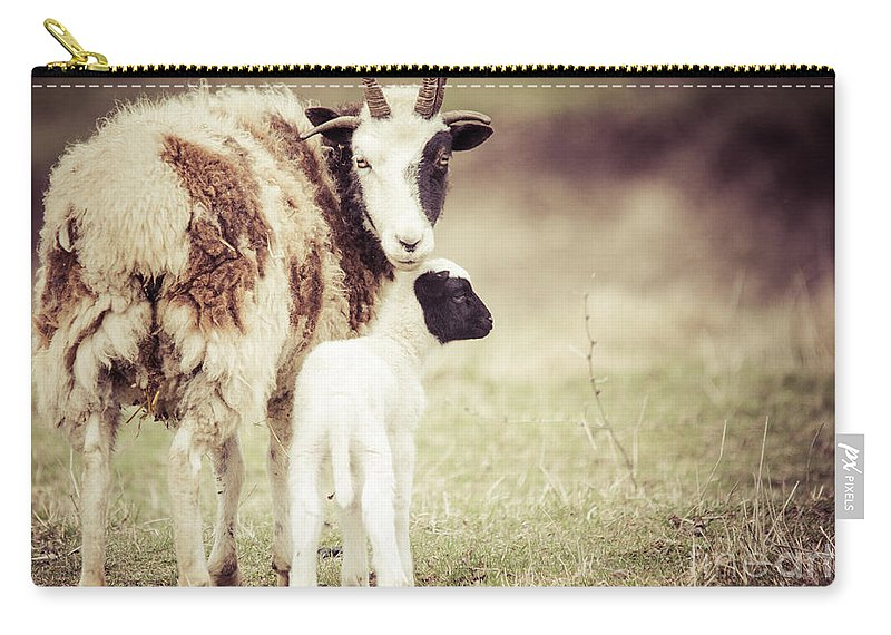 Rustic Scene Carry-all Pouch featuring the photograph Ewe And Young by Cheryl Baxter