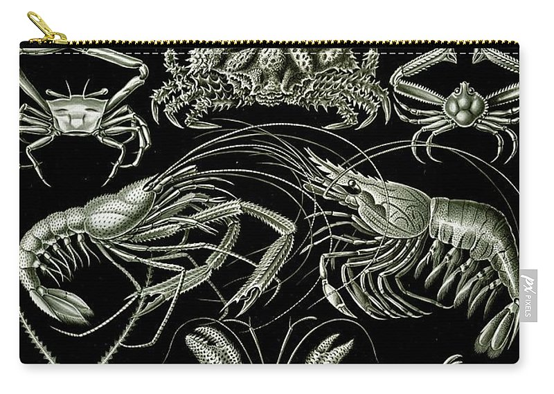 Crustacean Carry-all Pouch featuring the painting Examples Of Decapoda Kunstformen Der Natur by Ernst Haeckel