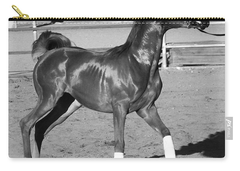 Horse Carry-all Pouch featuring the photograph Exercising Horse Bw by C H Apperson