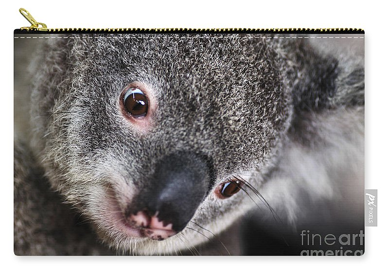 Photography Carry-all Pouch featuring the photograph Eye Am Watching You - Koala by Kaye Menner