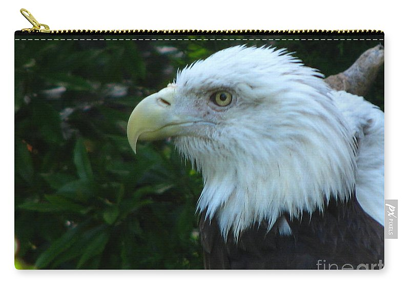 Eagle Carry-all Pouch featuring the photograph Eyecon by Greg Patzer