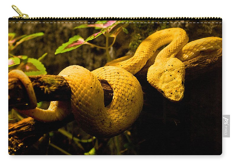 Yellow Carry-all Pouch featuring the photograph Eyelash Viper by Douglas Barnett