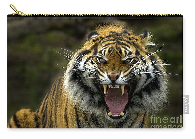 Tiger Carry-all Pouch featuring the photograph Eyes of the Tiger by Mike Dawson