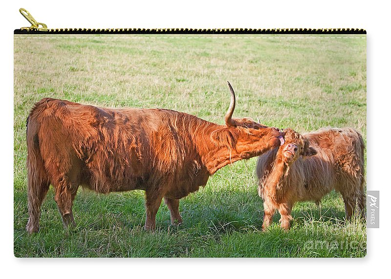 Highland Cattle Carry-all Pouch featuring the photograph Facewash From Mum by Liz Leyden