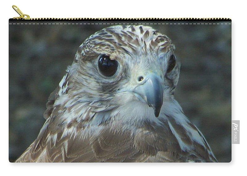 Falcon Carry-all Pouch featuring the photograph Falcon by Leticia Latocki