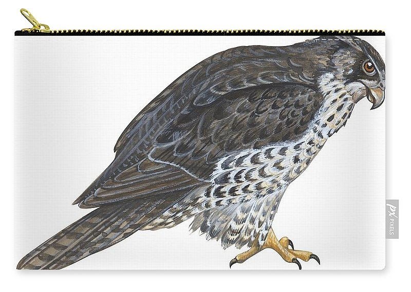 No People; Horizontal; Side View; Full Length; White Background; One Animal; Wildlife; Close Up; Zoology; Illustration And Painting; Bird; Beak; Feather; Talon; Animal Pattern; Falcon; Falco Rusticolus; Bird Of Prey Carry-all Pouch featuring the painting Falcon by Anonymous