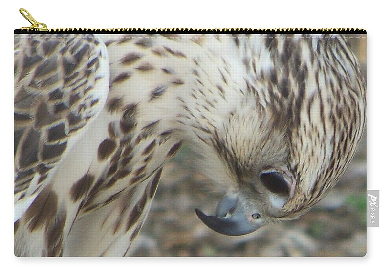 Falcon Carry-all Pouch featuring the photograph Bowing Falcon by Leticia Latocki