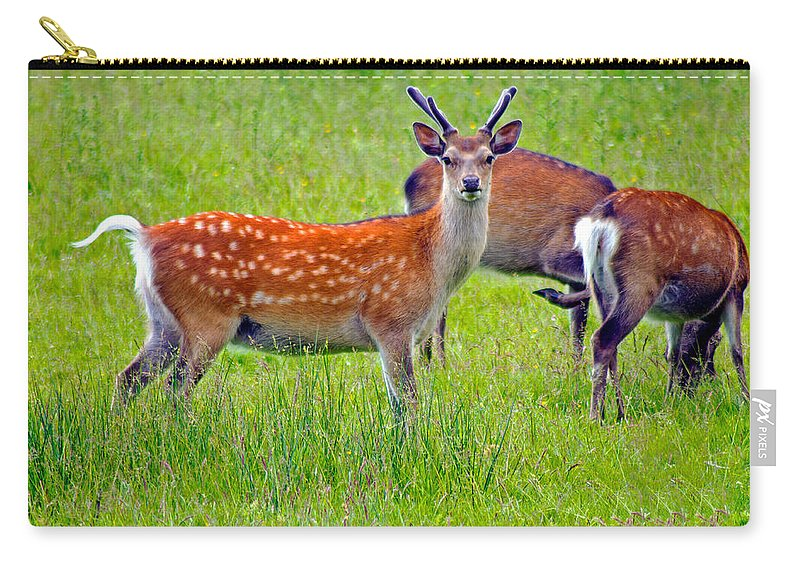 Fallow Deer Carry-all Pouch featuring the photograph Fallow Deer by Tony Murtagh