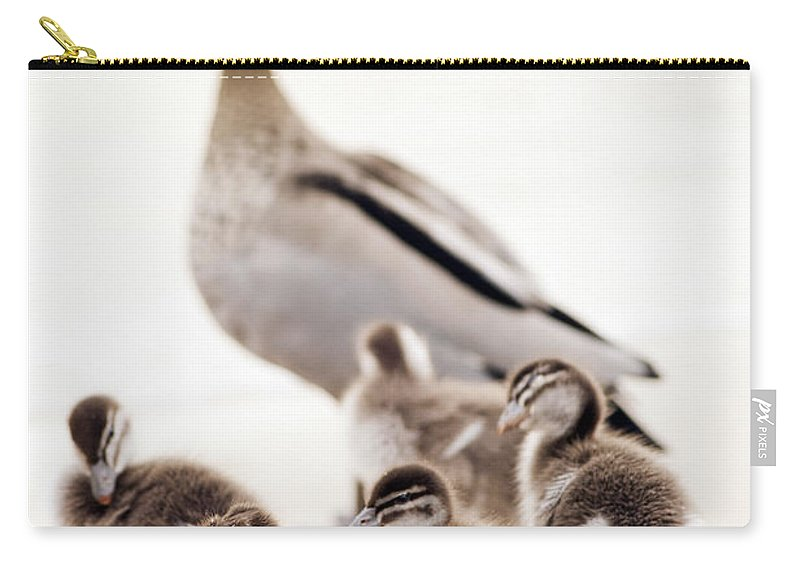 Ducklings Carry-all Pouch featuring the photograph Family Of Ducks by Tim Hester