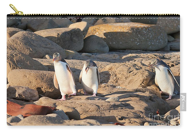 South Island Carry-all Pouch featuring the photograph Family Of Nz Yellow-eyed Penguin Or Hoiho On Shore by Stephan Pietzko