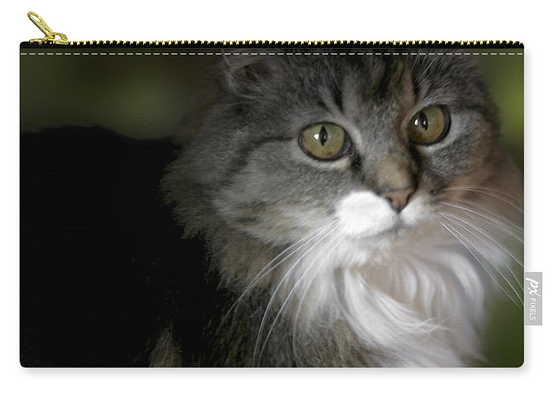 Animal Carry-all Pouch featuring the photograph Fancy Cat by Belinda Greb