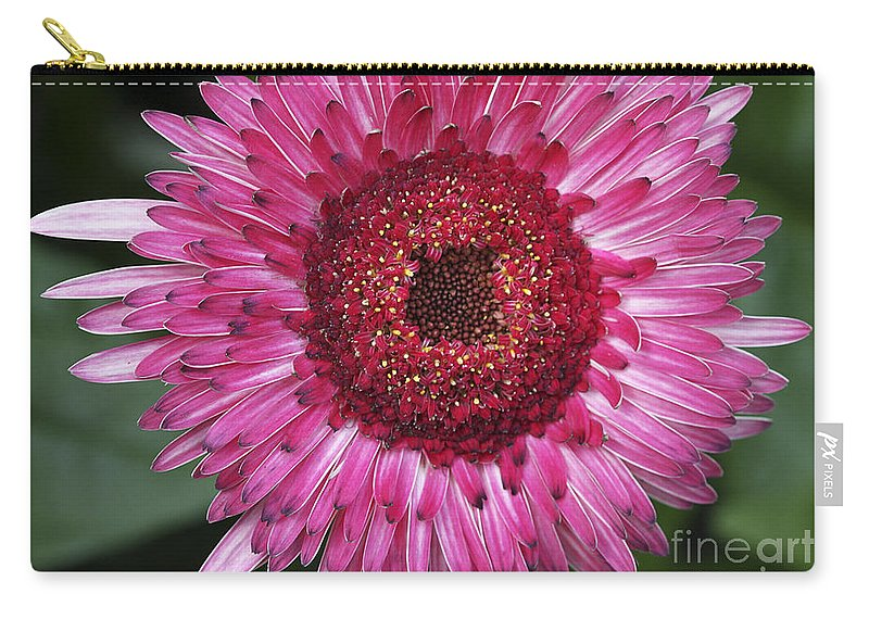 Flower Carry-all Pouch featuring the photograph Fancy Pink Daisy by Deborah Benoit