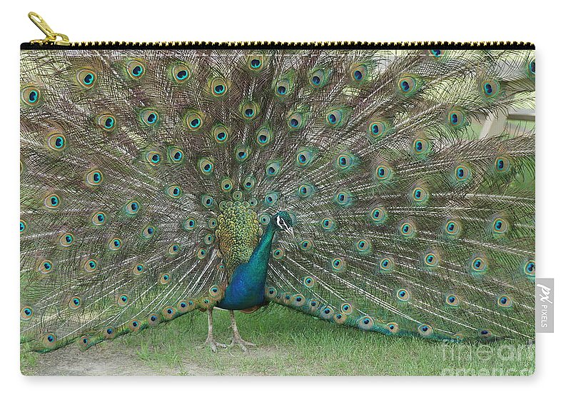 Peacock Carry-all Pouch featuring the photograph Feathers On Display by Jeffery L Bowers