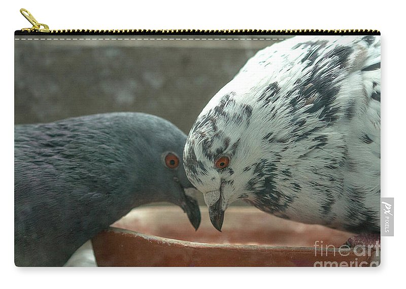 Birds Carry-all Pouch featuring the photograph Feeding Pigeons by Jivko Nakev