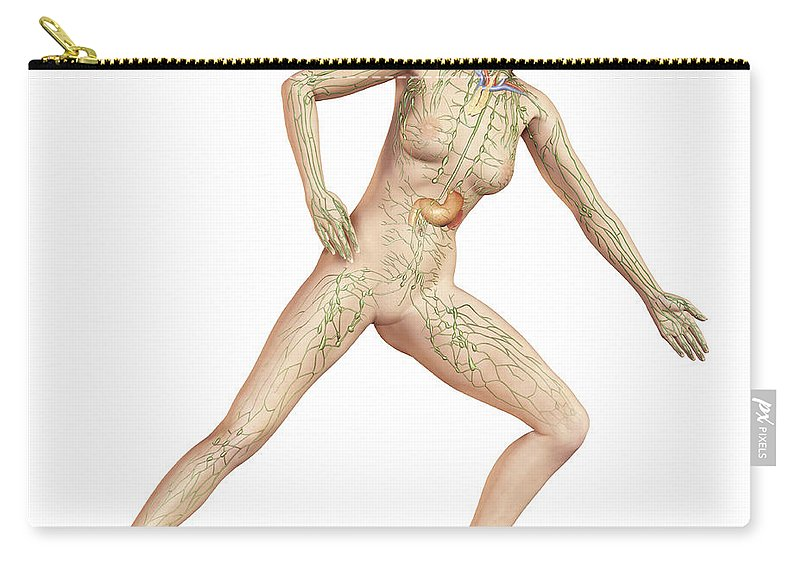 Three Dimensional Carry-all Pouch featuring the digital art Female Body In Dynamic Posture by Leonello Calvetti