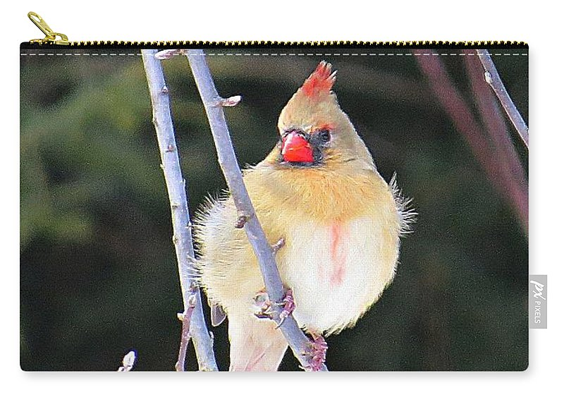 Cardinal Carry-all Pouch featuring the photograph Female Cardinal In Tree by MTBobbins Photography