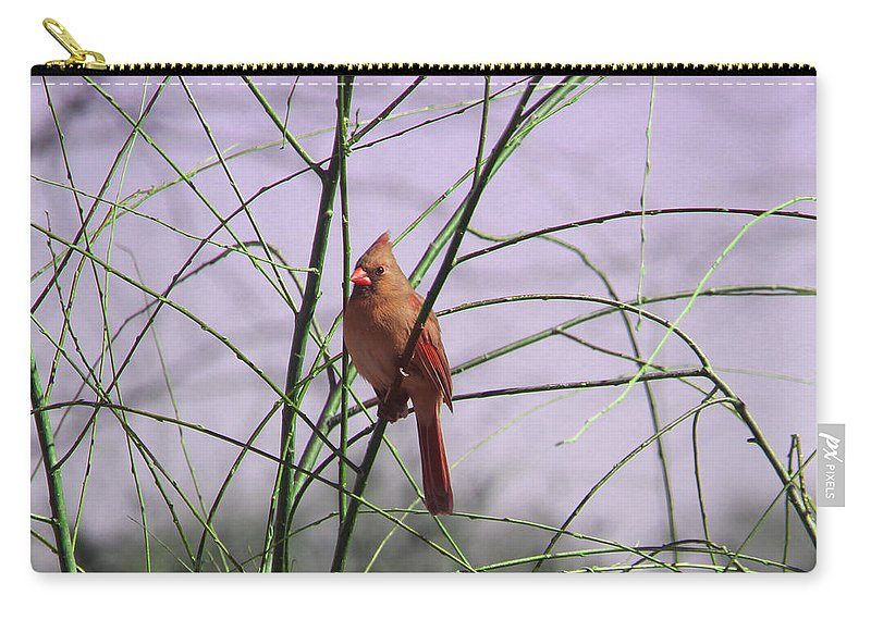 Tn Carry-all Pouch featuring the photograph Female Cardinal In Willow by Ericamaxine Price