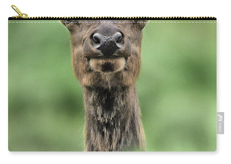 North America Carry-all Pouch featuring the photograph Female Elk Portrait Yellowstone National Park Wyoming by Dave Welling