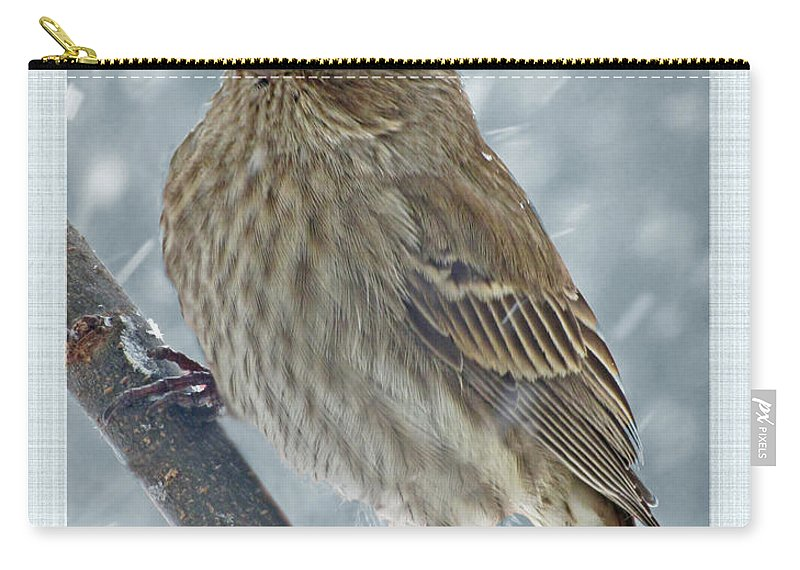 Bird Carry-all Pouch featuring the photograph Female House Finch In Snow by Debbie Portwood