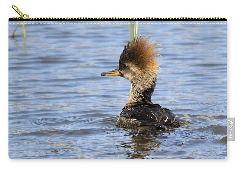 Duck Carry-all Pouch featuring the photograph Female Hooded Merganser by Bonfire Photography