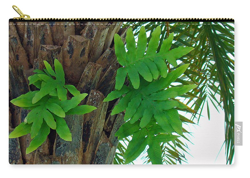 Fern Carry-all Pouch featuring the photograph Ferns 1 by Nancy L Marshall