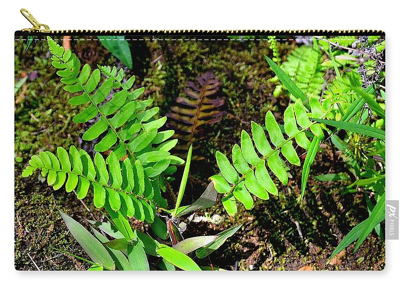 Cascade Carry-all Pouch featuring the photograph Ferns by Tara Potts