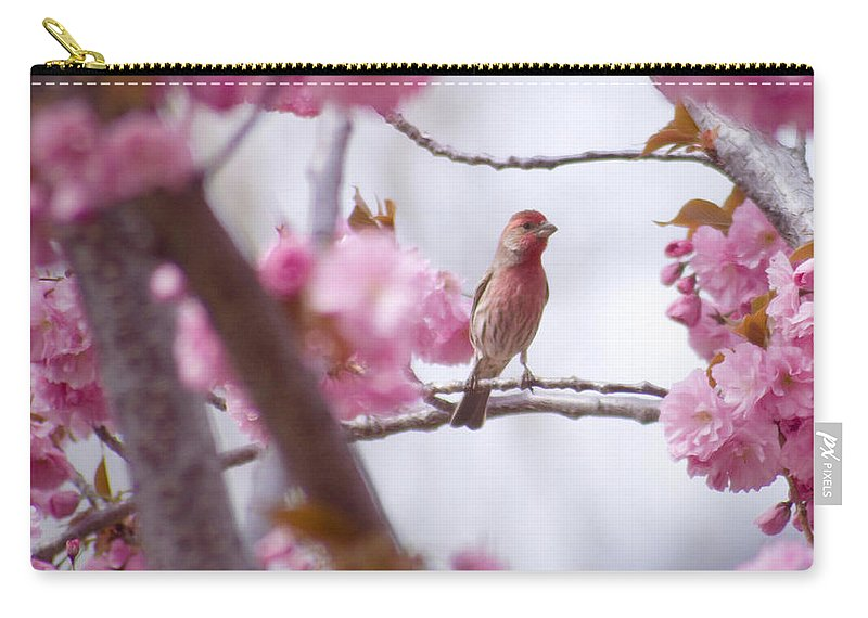Bird Carry-all Pouch featuring the photograph Finch Frame by Andrea Goodrich