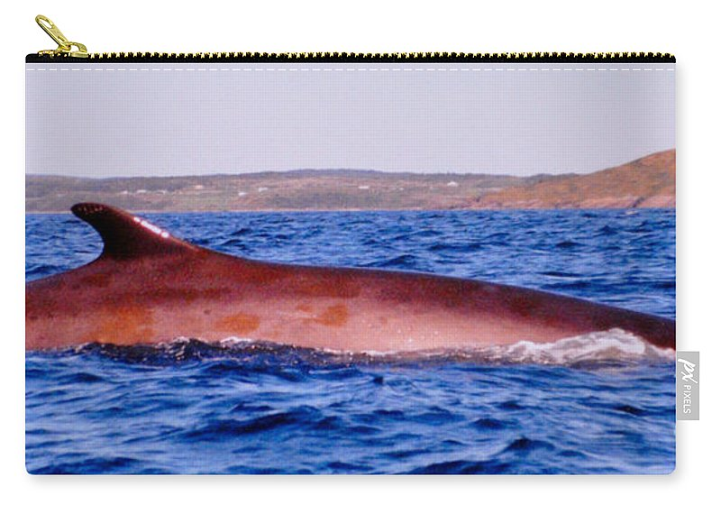 Whales Carry-all Pouch featuring the photograph First Sighting Of The Summer by Lydia Holly