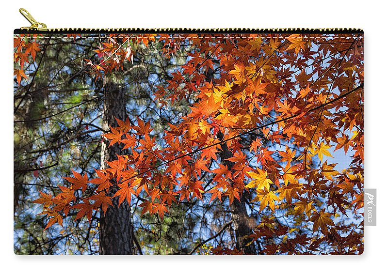 Japanese Carry-all Pouch featuring the photograph Flaming Maple Beneath The Pines by Kathleen Bishop