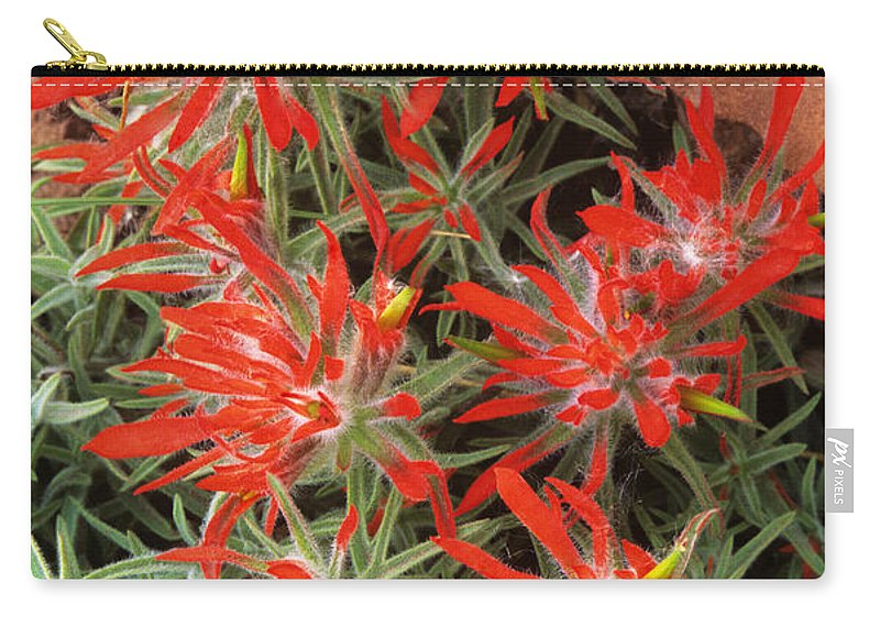 Zion Paintbrush Carry-all Pouch featuring the photograph Flaming Zion Paintbrush Wildflowers by Dave Welling
