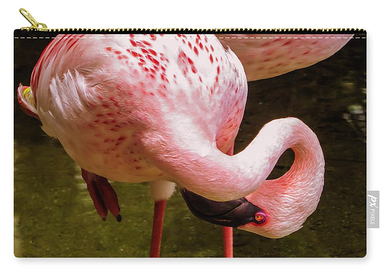 Flamingo Carry-all Pouch featuring the photograph Flamingo 		 by Zina Stromberg
