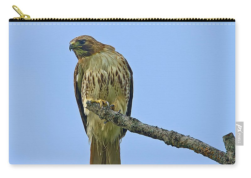 Red Tailed Hawk Carry-all Pouch featuring the photograph Fledged Red Tailed Hawk by John Vose