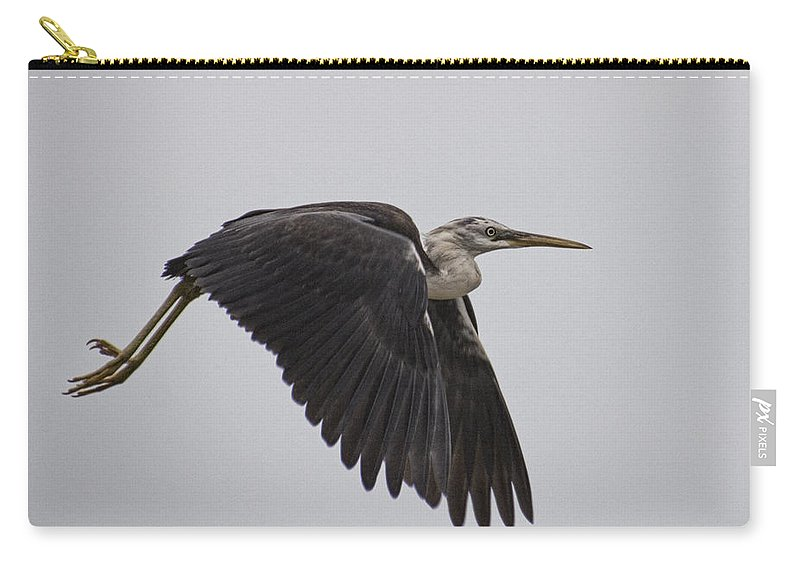 Flight Carry-all Pouch featuring the photograph Flight Of The White Necked Heron by Douglas Barnard