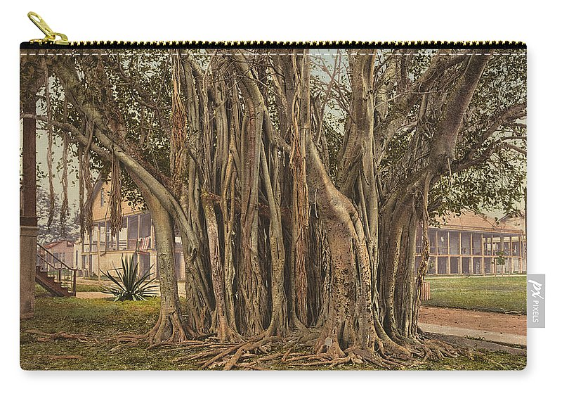 1890 Carry-all Pouch featuring the painting Florida Rubber Tree, C1900 by Granger