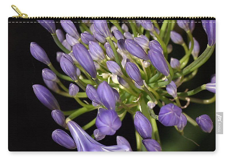 Agapanthus Carry-all Pouch featuring the photograph Flower- Agapanthus-blue-buds-one-flower by Joy Watson