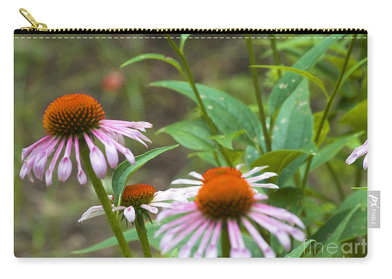 Austin Texas Carry-all Pouch featuring the photograph Flower - Cone Flower- Luther Fine Art by Luther Fine Art