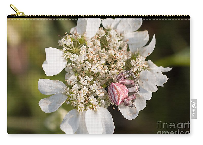 Bulgaria Carry-all Pouch featuring the photograph Flower Crab Spider by Jivko Nakev