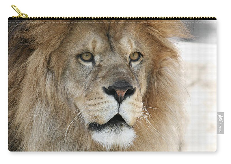 Lion Carry-all Pouch featuring the photograph Fluffy Tango by Judy Whitton