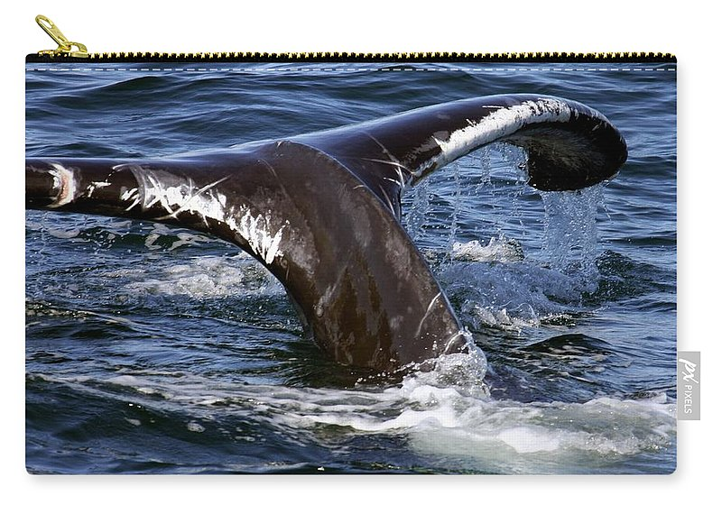 Cape Cod Carry-all Pouch featuring the photograph Fluke Shot 2 by Stuart Litoff