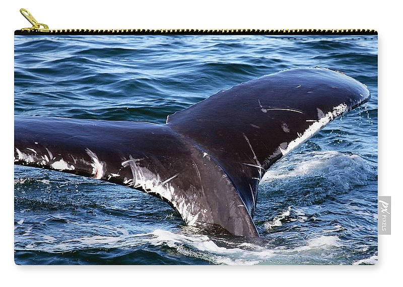 Cape Cod Carry-all Pouch featuring the photograph Fluke Shot 3 by Stuart Litoff