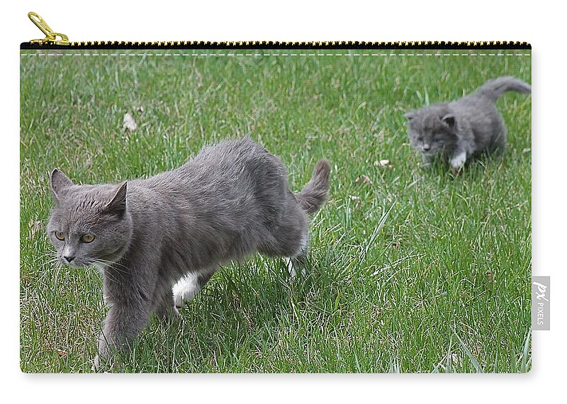 Cats Carry-all Pouch featuring the photograph Follow Me Home by Wayne Williams