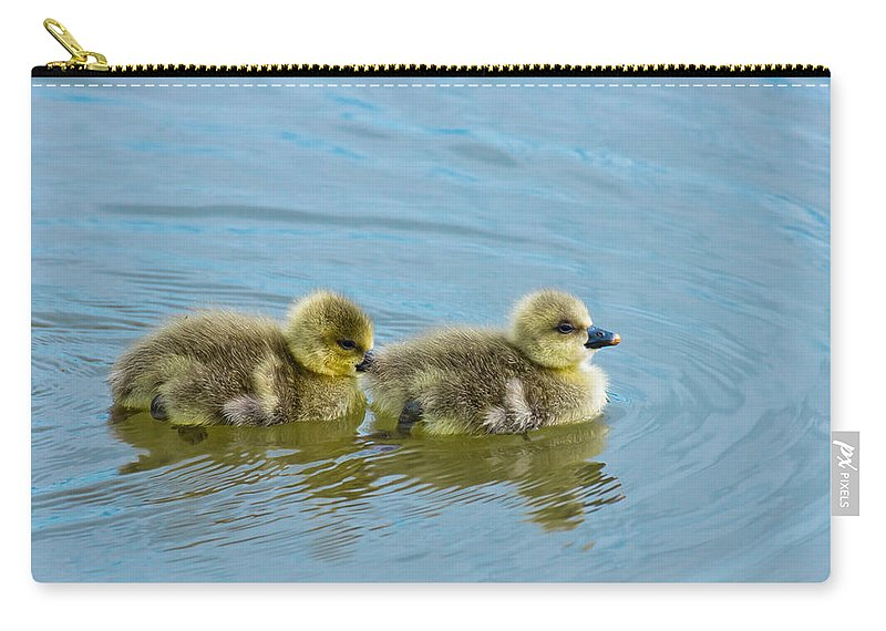 Duckling Baby Geese Bird Gosling Water Carry-all Pouch featuring the photograph Follow Me by Scott Carruthers