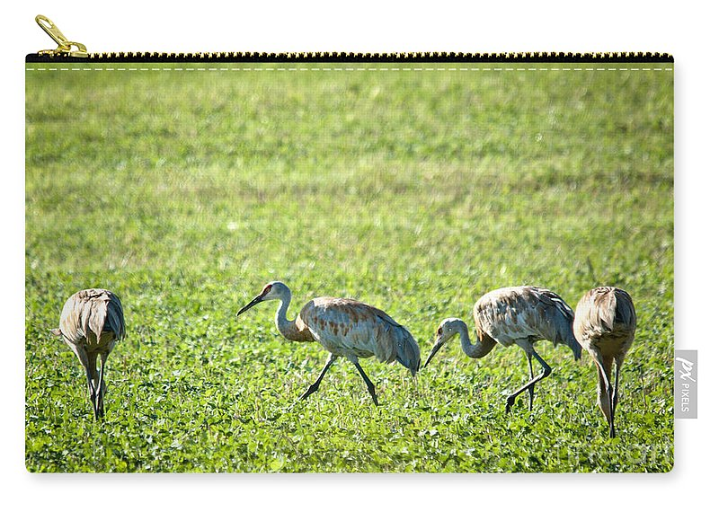 Sandhill Cranes Carry-all Pouch featuring the photograph Foraging by Cheryl Baxter