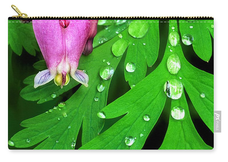 Formosa Bleeding Heart Carry-all Pouch featuring the photograph Formosa Bleeding Heart On Ferns by Dave Welling