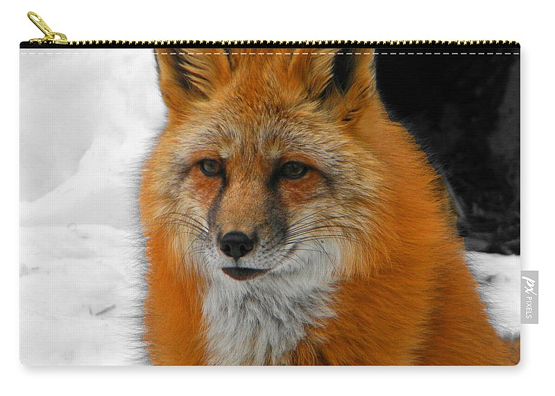 Fox Carry-all Pouch featuring the photograph Fox Gaze by Phillip W Strunk