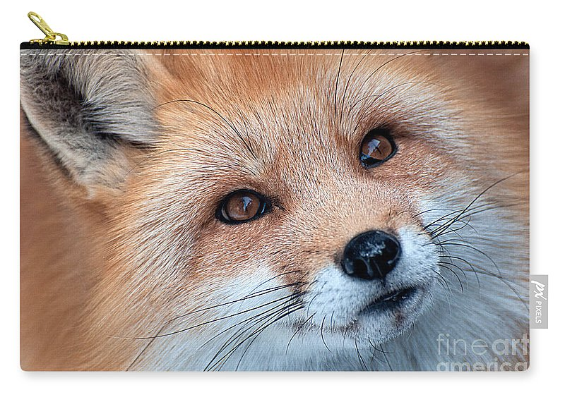 Red Fox Carry-all Pouch featuring the photograph Foxy Lady by Bianca Nadeau